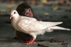 monkeypigeonuppa_450x300