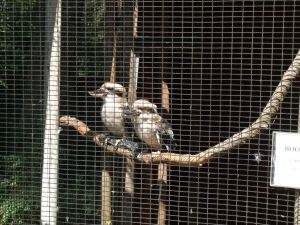 Bird sanctuary-Kookaberras