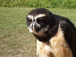 Bird sanctuary-Owl