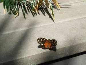 Butterfly gardens13
