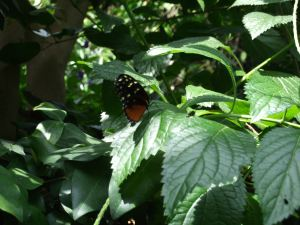 Butterfly gardens14