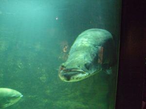 Hugefish2