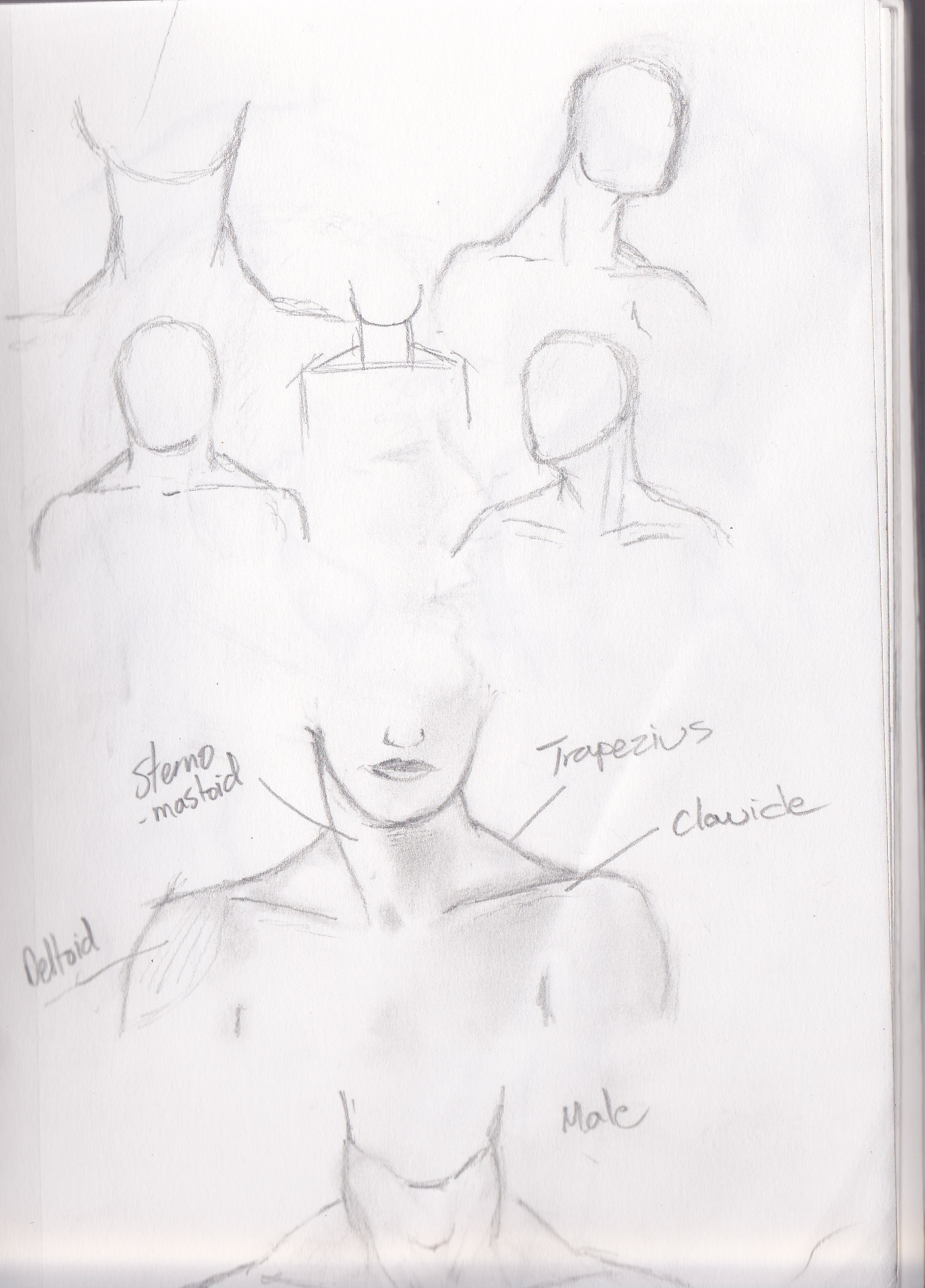 Neckline Drawing : Moved permanently